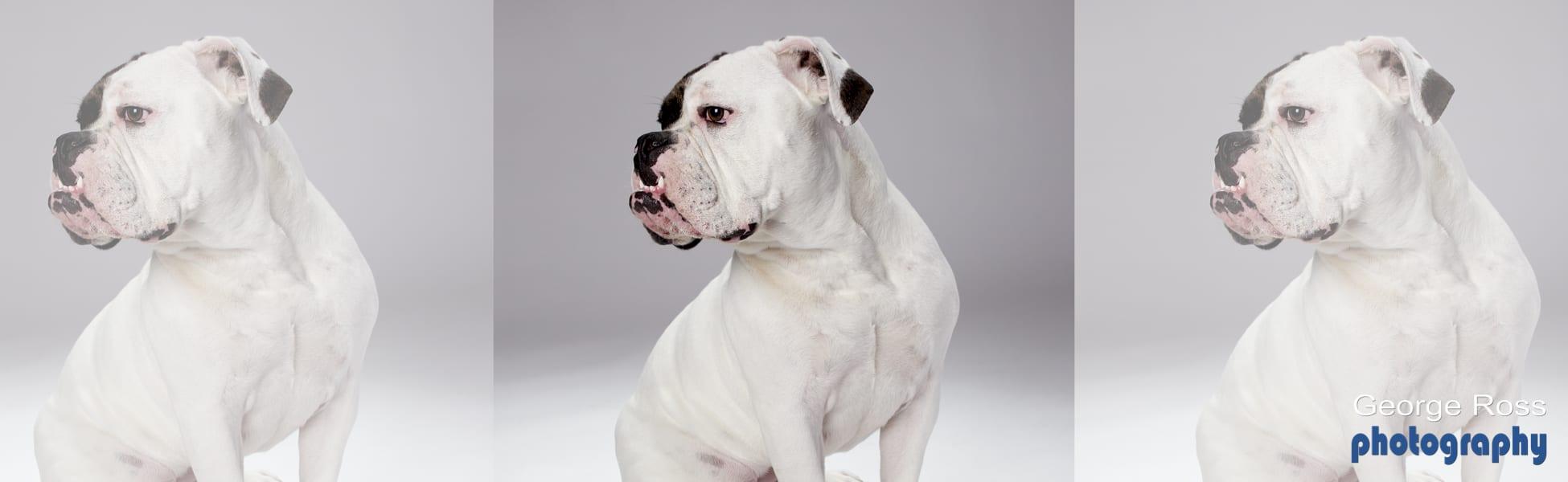 RiI Dog Photography