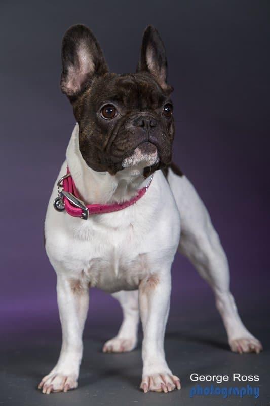 Rhode Island Dog Portraits