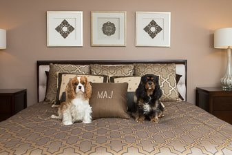 two spaniels on a bed on a newly remodeled bedroom