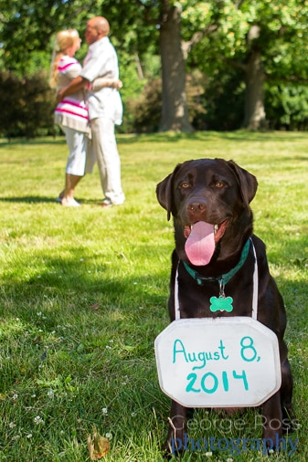 a sign hung around a dogs neck announcing the date off the wedding at an engamnet photoshoot in roger williams park, providence, rhode island