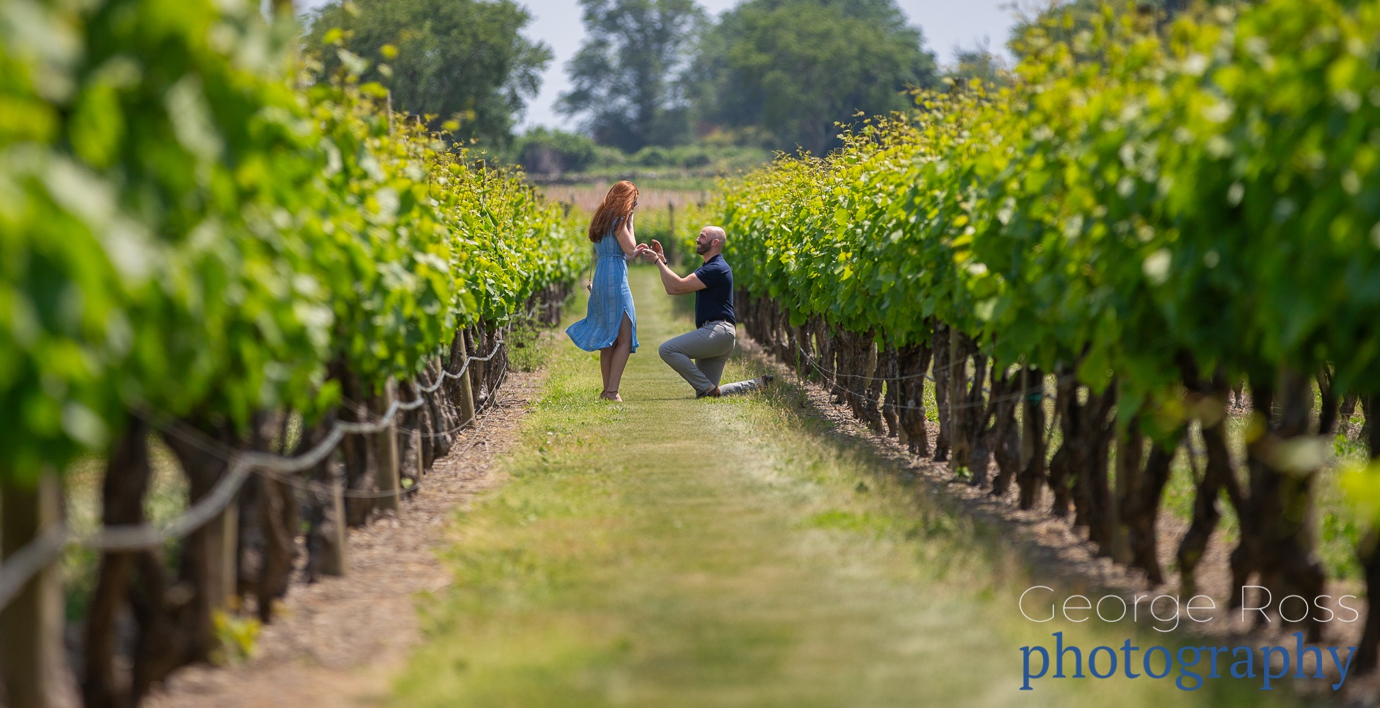 a surprise proposal at newport vineyards, rhode island